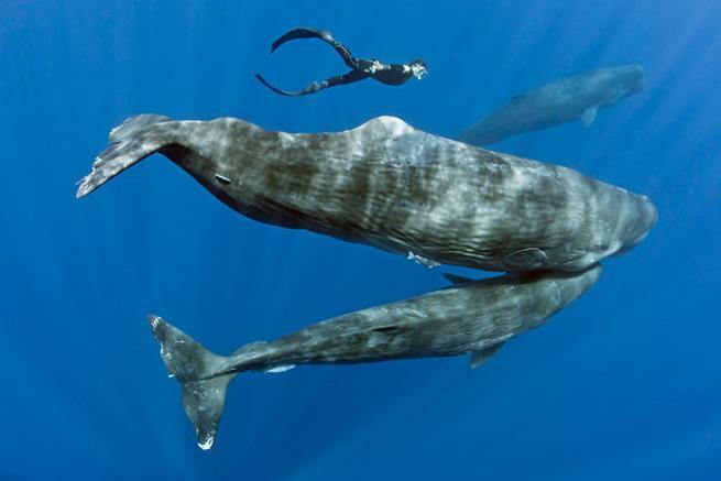 baleias-07
