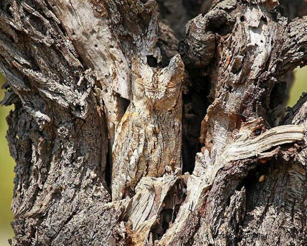 camouflaged_animals_19