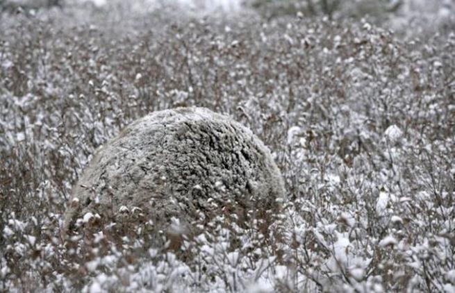 camouflaged_animals_33