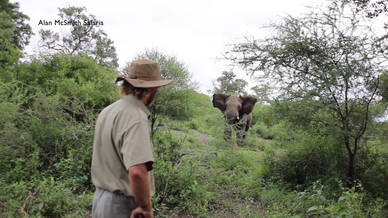 elefante-domando