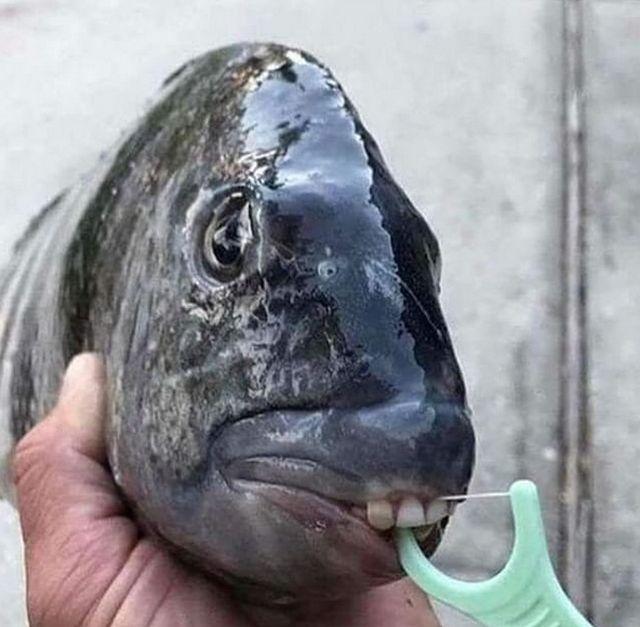 strange_fish_02