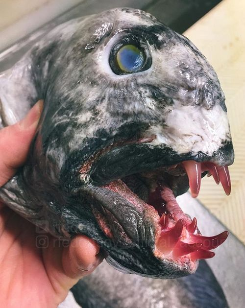 strange_fish_10