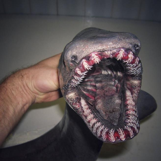 peixe-02
