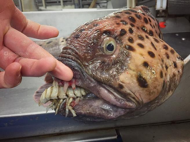 peixe-05