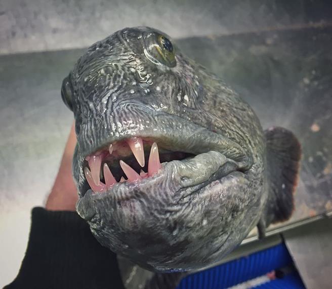 peixe-09