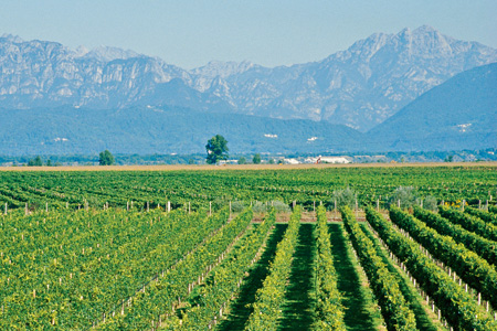 Friuli - Fantinel