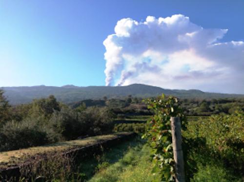 Vinhedos da Planeta: aos pés do vulcão Etna, na Sicília