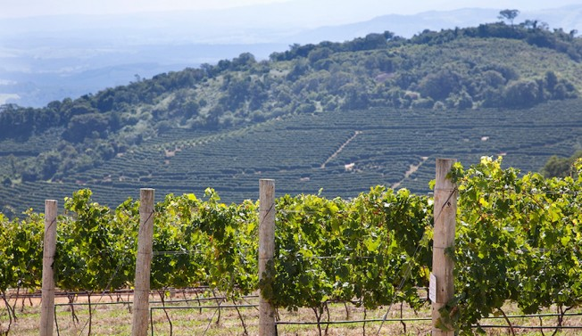 Vinhedos da Guaspari: nova fronteira do vinho, em Espírito Santo do Pinhal, no estado de São Paulo