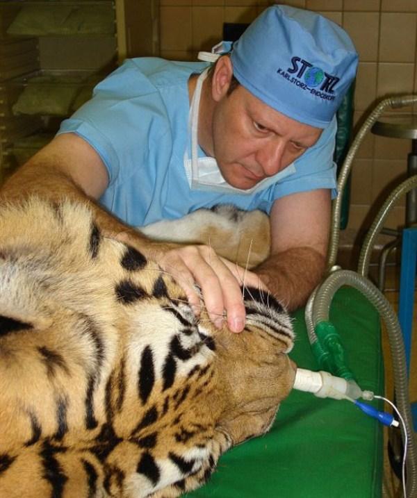 dentista_animais_13