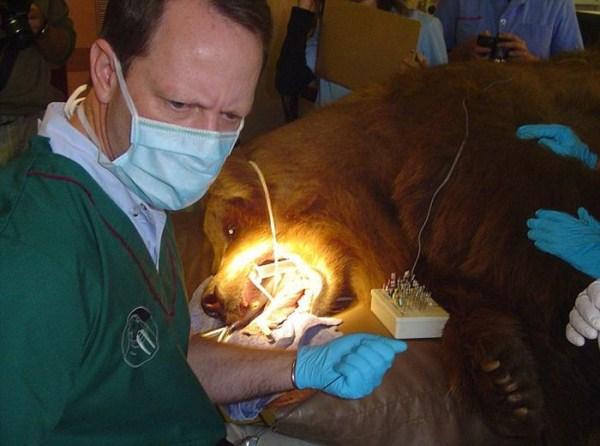 dentista_animais_17