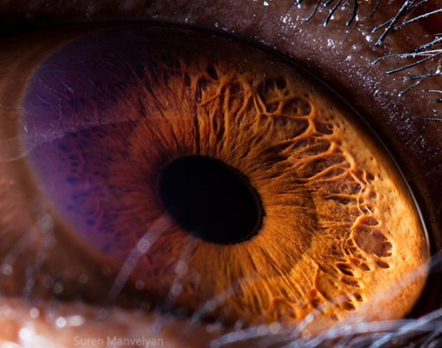 olhos_animais_01