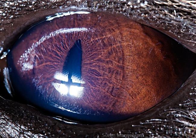 olhos_animais_03