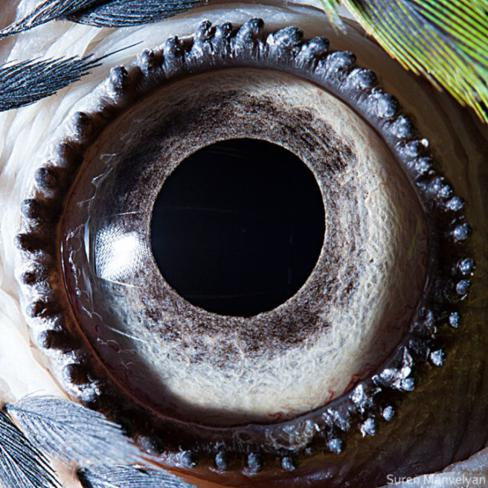 olhos_animais_11