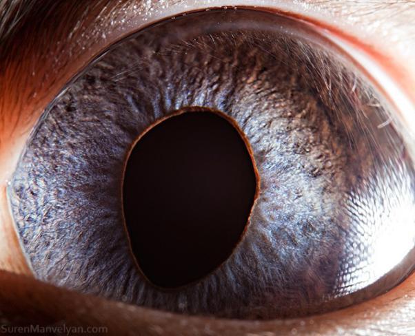 olhos_animais_13