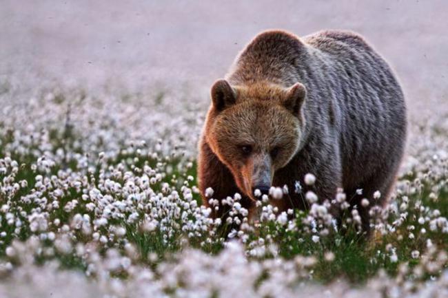 wildlife_photos_30