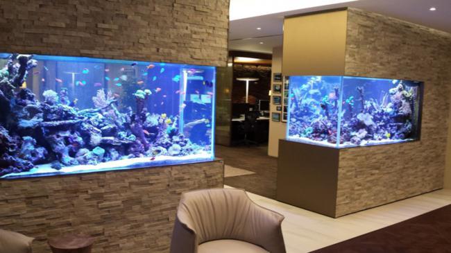 aquarios_04