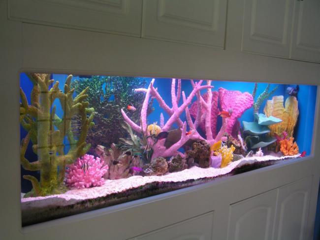 aquarios_23