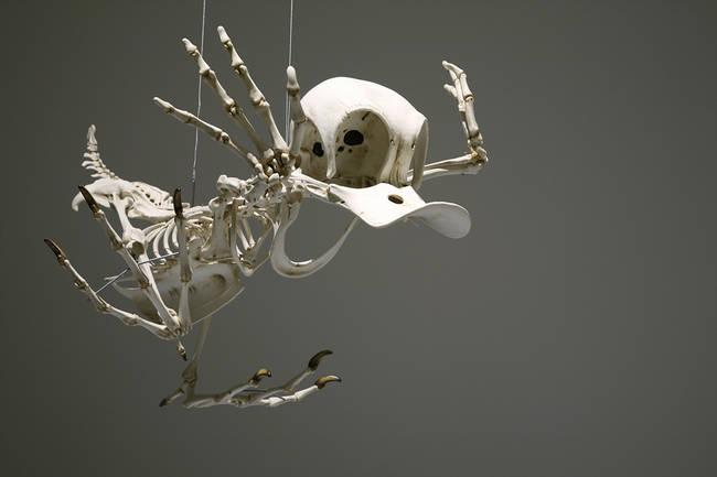 esqueletos_01