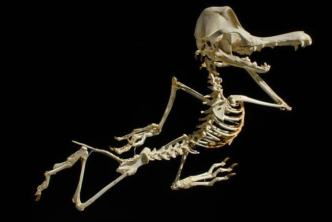 esqueletos_06