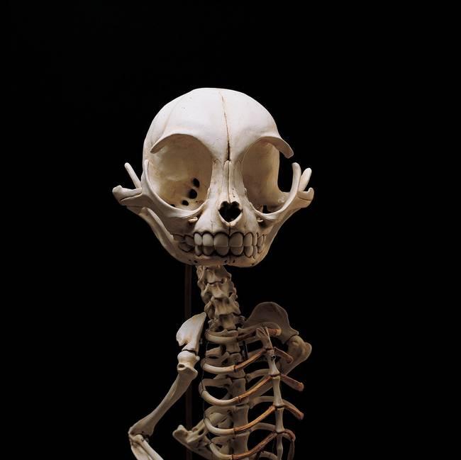 esqueletos_08