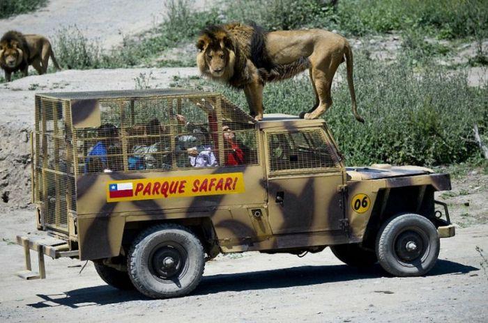 safari_05