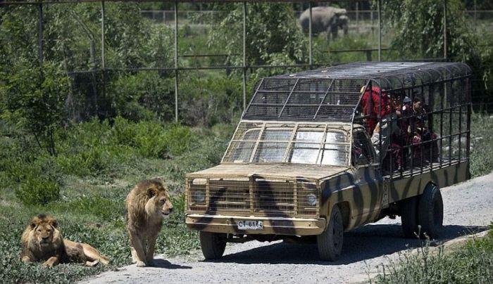 safari_08