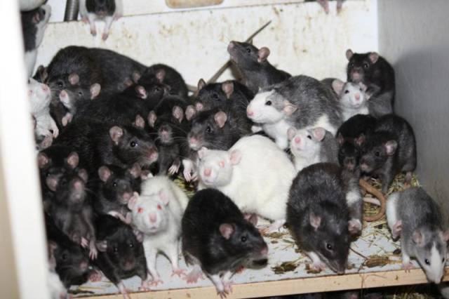 ratos_apartamento_07