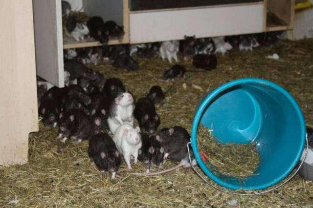 ratos_apartamento_09