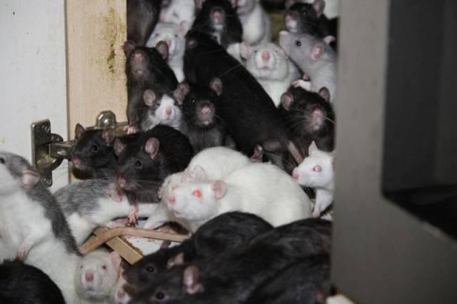 ratos_apartamento_13