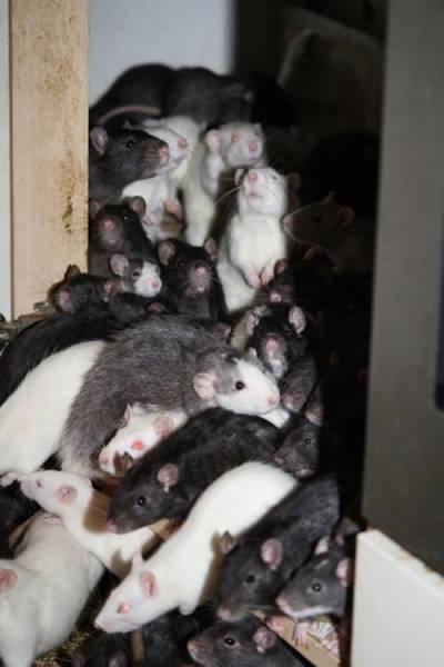 ratos_apartamento_14