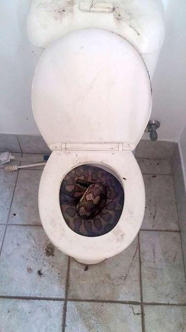 banheiro_cobra_01