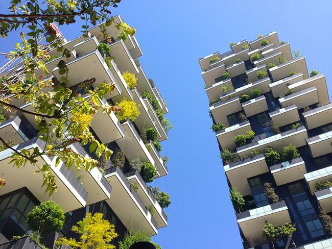 floresta_vertical_07