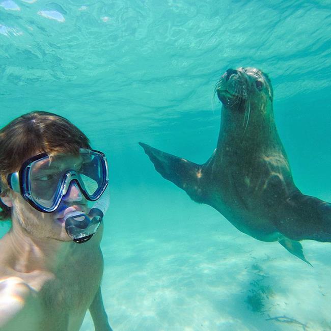 selfie_animais_10