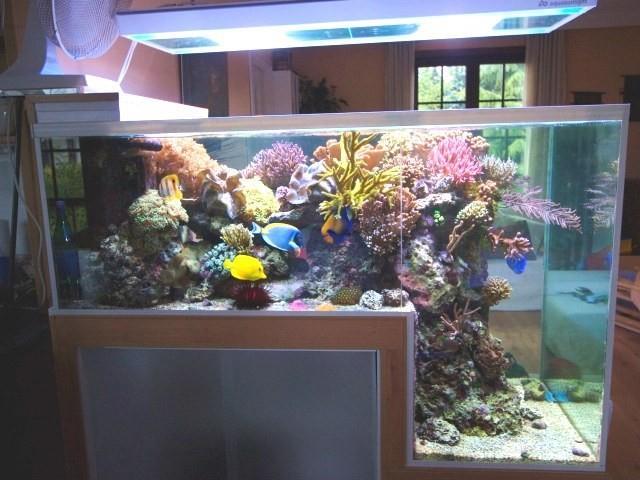 aquario__20