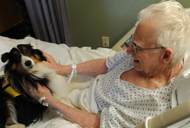 animais_hospital_03