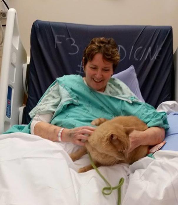 animais_hospital_07