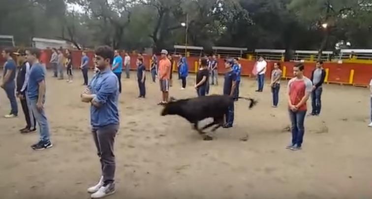 touro_humano