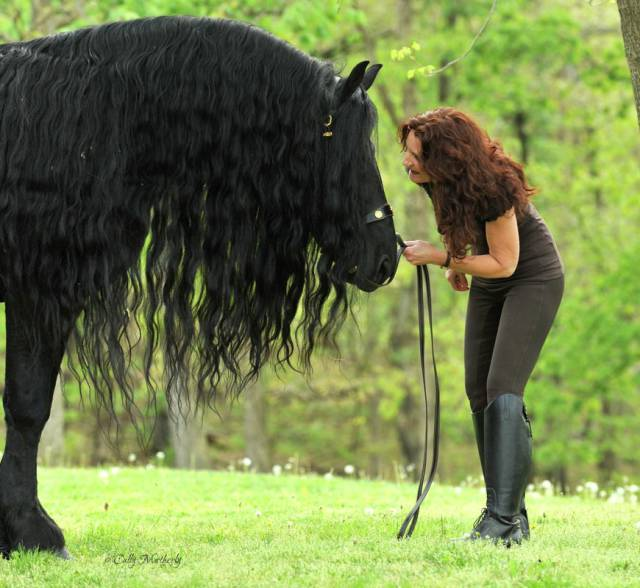 this_horse_might_have_the_worlds_most_fabulous_mane_640_02