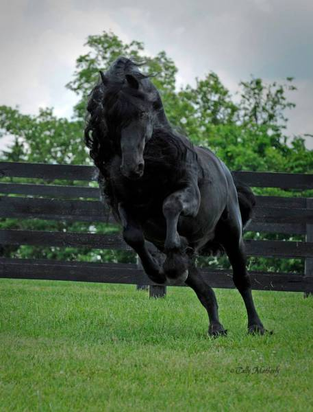 this_horse_might_have_the_worlds_most_fabulous_mane_640_19