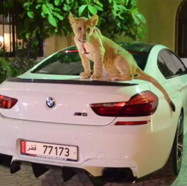 the_filthy_rich_like_to_flaunt_pictures_of_their_exotic_pets_online_640_04