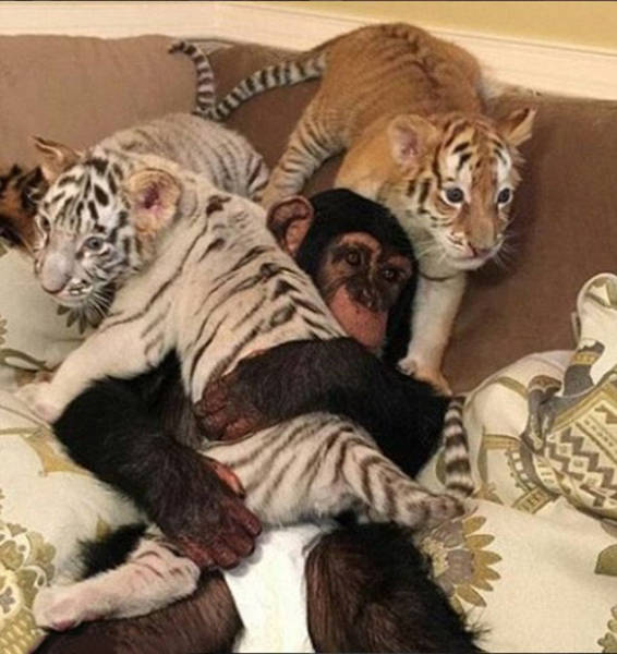 the_filthy_rich_like_to_flaunt_pictures_of_their_exotic_pets_online_640_07