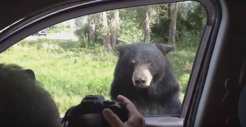 urso_porta