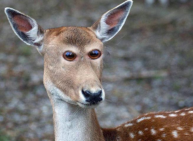 olhos_animais__05