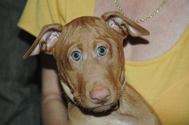 olhos_animais__10