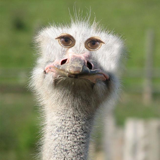 olhos_animais__17
