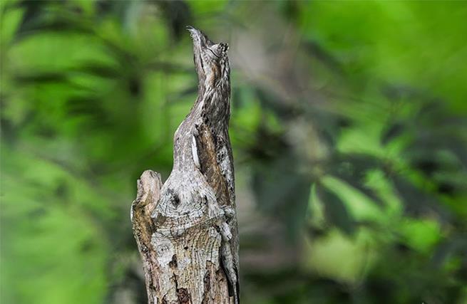 camuflagem-18