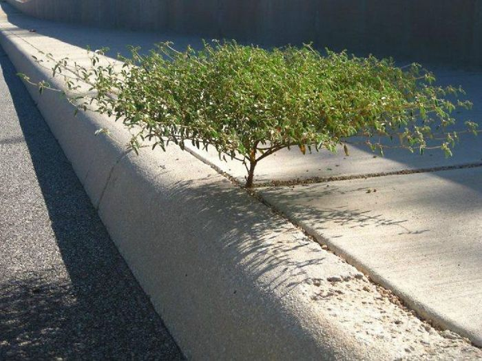 trees_refuse_to_give_up_04