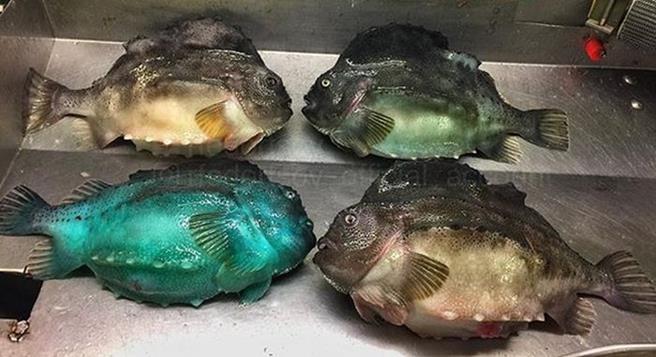 strange_fish_05