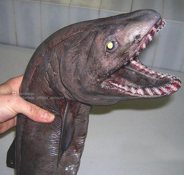 strange_fish_17