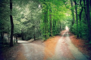 exquisite-pictures-of-paths-exquisite-fork-in-the-road-2-paths-hr-ringleader
